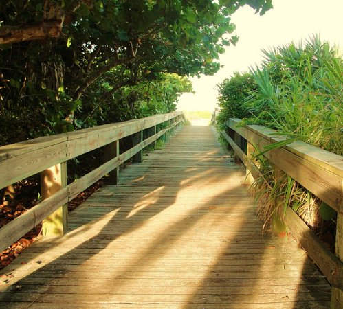 Resort on Cocoa Beach : Wooden Path at the Park