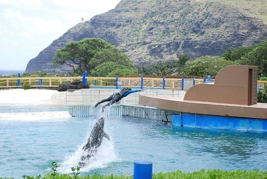 Sea Life Park- Swimming With the Dolphins