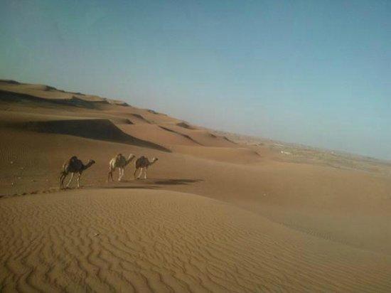 Корабли пустыни Photo De Al Sahra Desert Resort