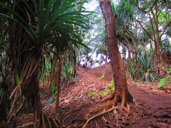 Kauai Photo Tours : Trail to beach