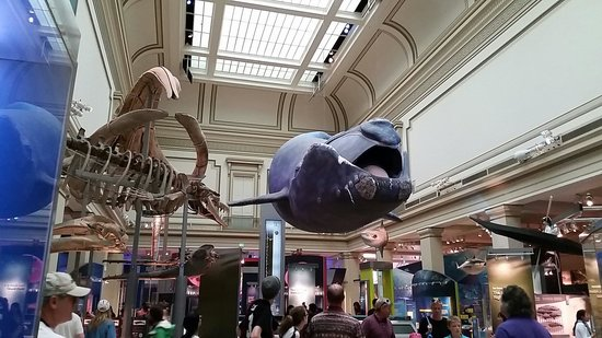 National Museum of Natural History : Smitsonian