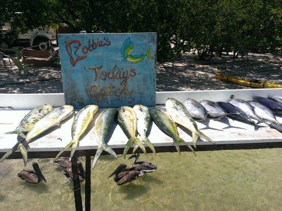 Islamorada Fishing: Mahi Mahi & Tuna