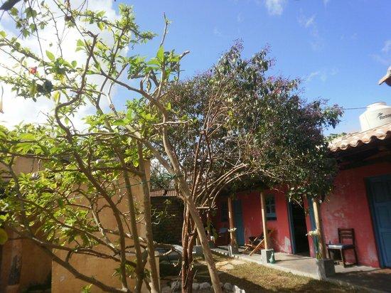 Posada del Abuelito: nous n'avons reussi a faire la photo du colibri dans cet arbre