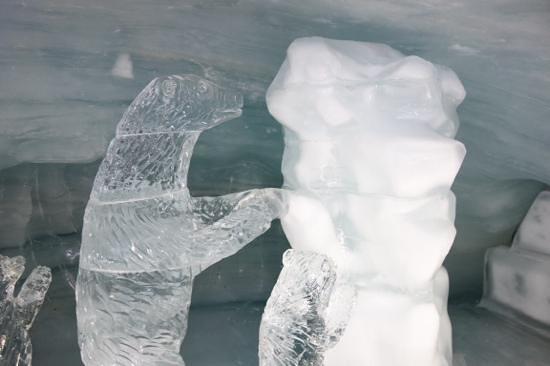 Jungfraujoch : bear