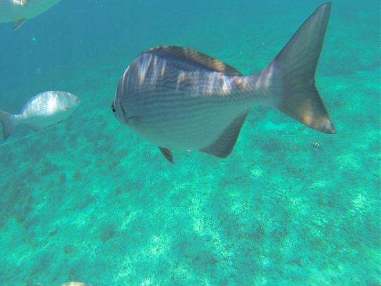 Iberostar Varadero : La experiencia del snorkeling en el pequeño arrecife es imperdible, pero se paga aparte.