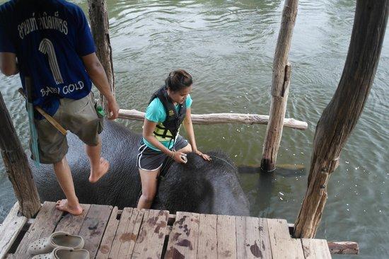 Taweechai Elephant Camp : Getting ready for bathing.