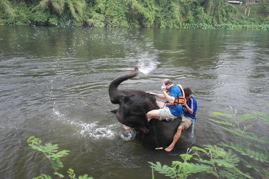 Taweechai Elephant Camp : Malia, my elephant that day had so much fun in the water. She loves to blow the water like that.