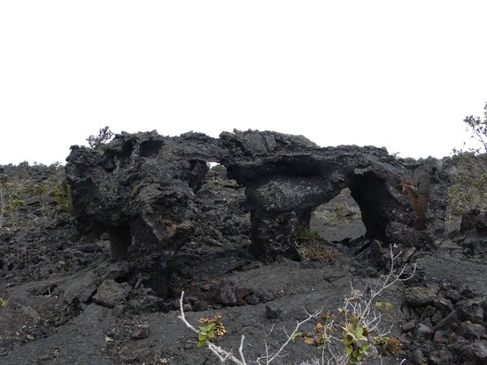 Chain of Craters Road: Lava trees