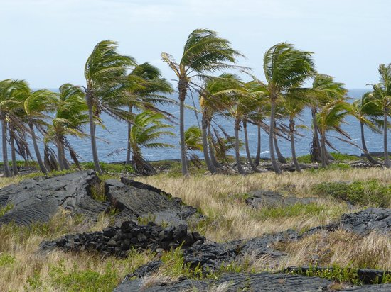 Chain of Craters Road: Some survive the forces of Kilauea
