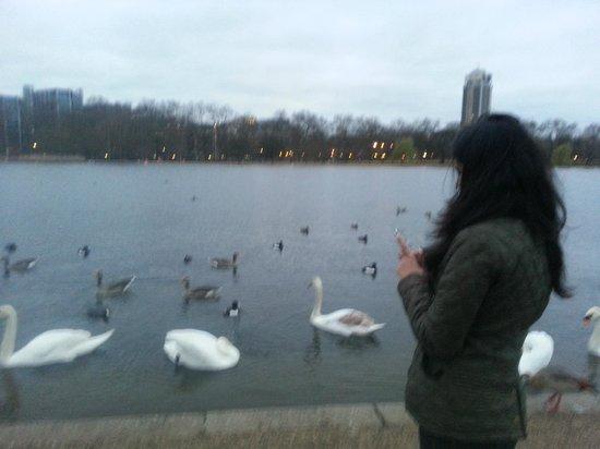 The Athenaeum Hotel & Residences: Hyde park feeding the ducks