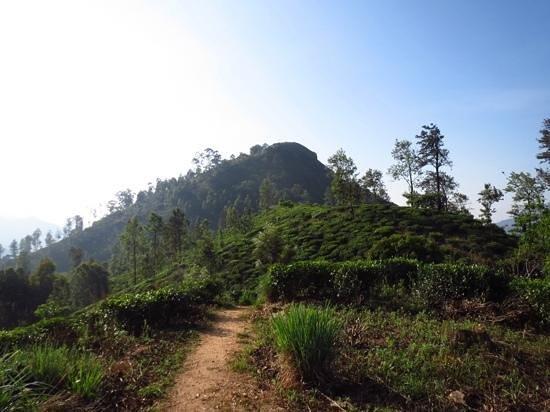 98 Acres Resort and Spa : uitzicht op little adams peak