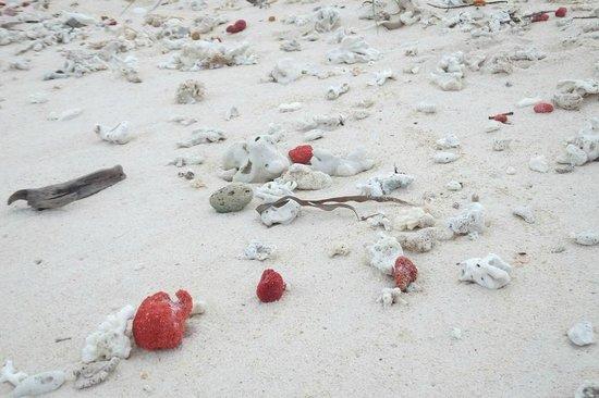Pink Beach: plaża