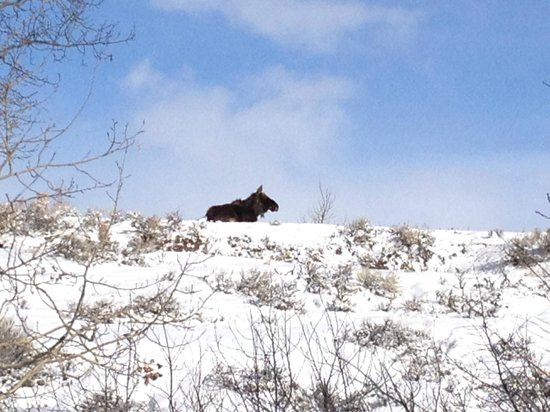 BrushBuck Wildlife Tours - Day Tours: Lonesome moose