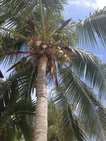 Ports of Call Resort: One day, we got some fresh coconuts with breakfast