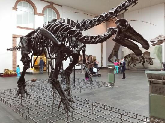 Photo of Senckenberg Natural History Museum (Naturmuseum Senckenberg) taken with TripAdvisor Cit