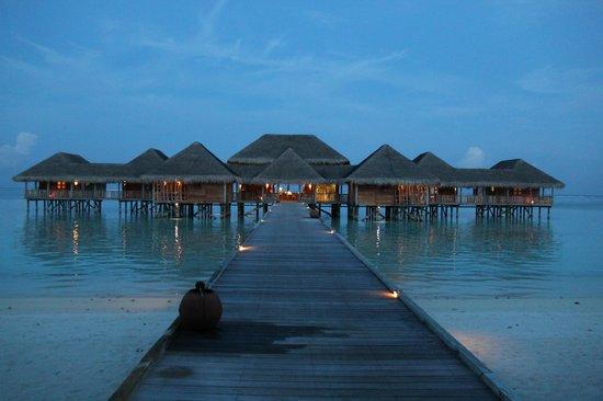 Gili Lankanfushi Maldives : Bar