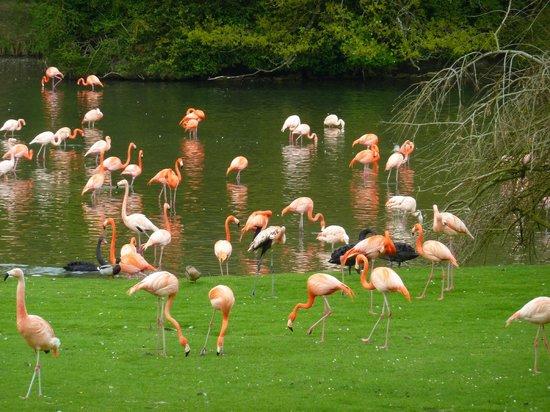 Reserve zoologique de Sauvage: Oiseaux