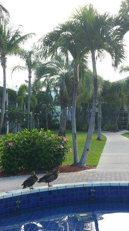Beachcomber Beach Resort & Hotel: Nice landscaping
