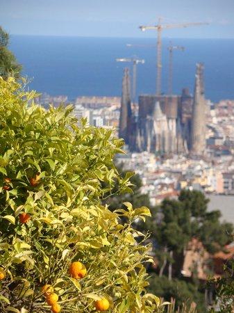 Evenia Rosello: Barcelona