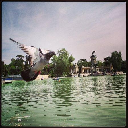 Parque del Retiro: incoming