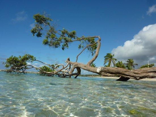 St. Anne Beach: plage de Ste Anne
