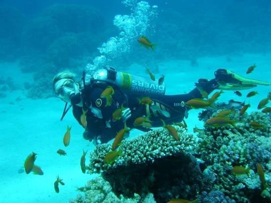 Sunshine Divers Club - Sharks Bay: Sunshine Divers