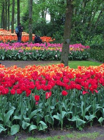 Amphora Apartment: Kuekenhoff gardens, 30 mins from Amphora