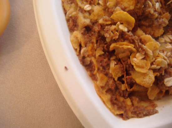 Continental Palacete: insects in the breakfast muesli