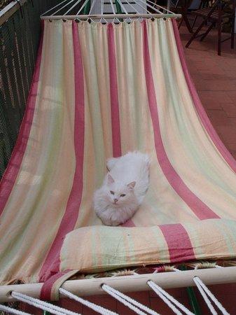 La Cappellina Bed and Breakfast: Pilù sull'amaca