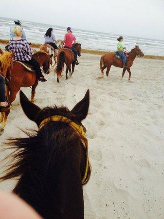 Horses On The Beach: Corpus Christi: Halfway Point