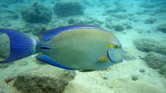 Hanauma Bay Nature Preserve: Fish at Hanauma Bay.