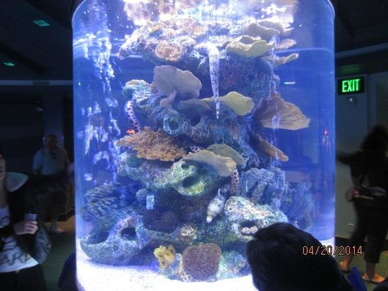 Epcot: An aquarium in Living Seas - one of many