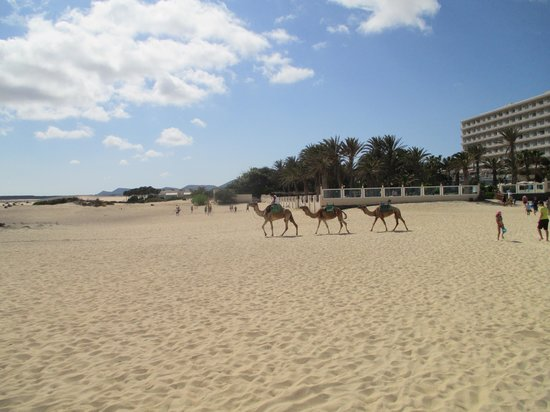ClubHotel Riu Oliva Beach Resort: Our first day and the camel ride was excellent!!!