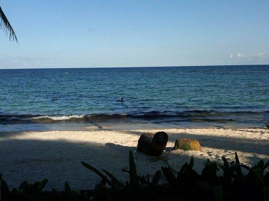 Tourist Train: Linda playa durante la vuelta a la Isla!