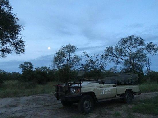 Nkorho Bush Lodge: Our jeep