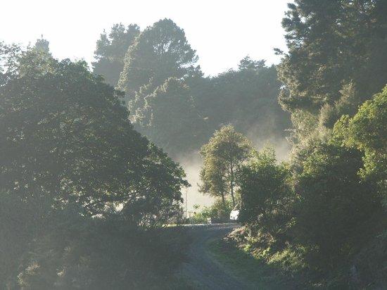 Whangarei Quarry Gardens: Misty morning at the Gardens.