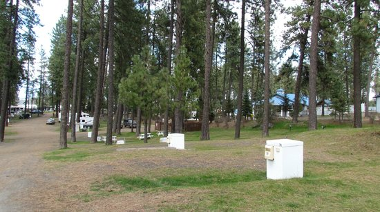 Ponderosa Falls RV Resort: several areas to pick from