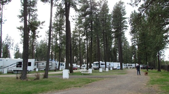 Ponderosa Falls RV Resort: many pull-through spots