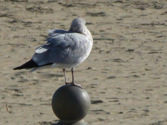 Waterman's Surfside Grille: Bird's eye view