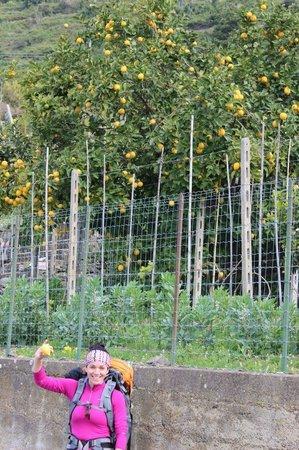Corte del Gallo: Des citrons plein les mains!