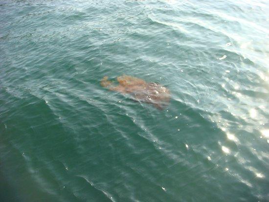Islas Palomino: Você não ia querer nadar perto disso! (2)