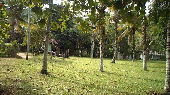 Praia de Japariz: muitas árvores