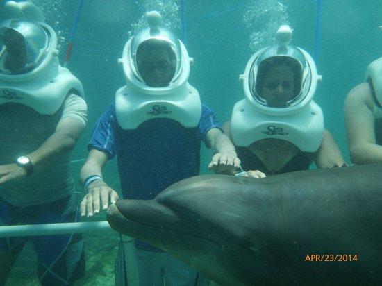 Dolphin Cove: Dolphin Helmet Dive