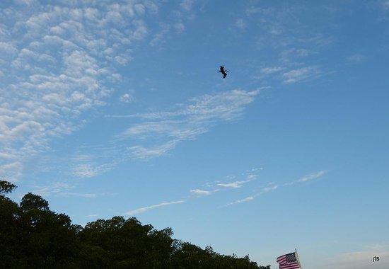 Kon-Tiki Resort: Flight over the dock