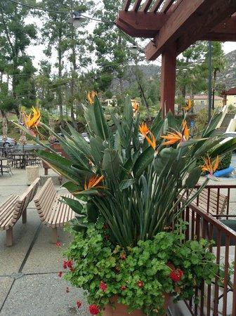 Welk Resort San Diego: Birds of Paradise