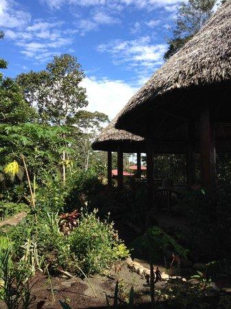 Yachana Lodge: Dining area and garden