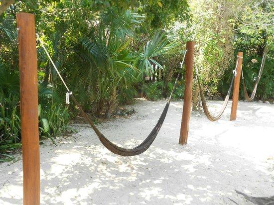 Viva Wyndham Maya : HAMACAS