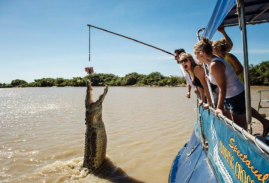 Northern Territory, Australien: Jumping Crocs Cruise, Yellow Waters