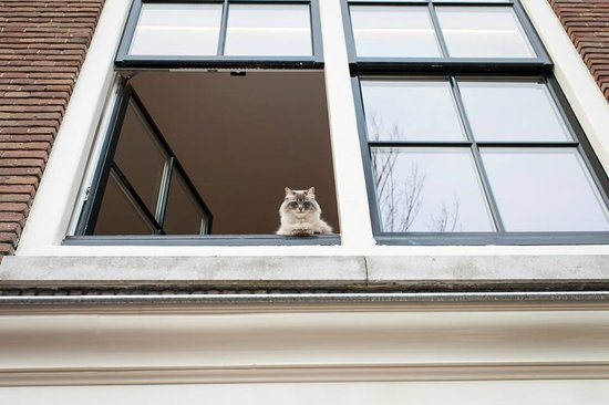 Jordaan : Disapproving Cat from one of the houses by the canal