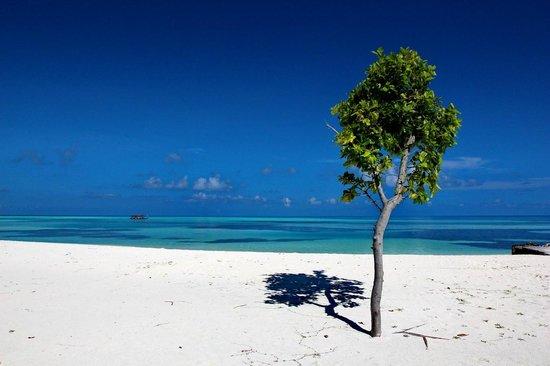 LUX* South Ari Atoll: Sand so Fine